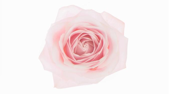 roselancome